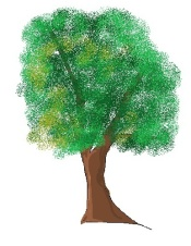 shady tree