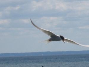K bird